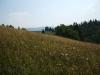 iarba-si-floricele